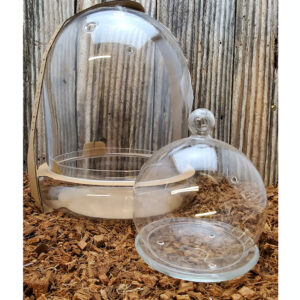 Cloche Glass Terrarium